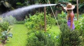 4 Efficient Ways to Keep Your Garden Watered