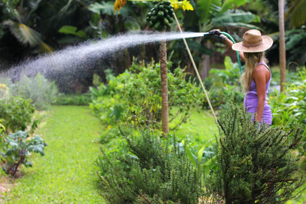 High Quality 4 Efficient Ways To Keep Your Garden Watered · Garden Watering
