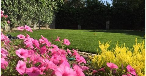 Why We Recommend Artificial Grass from Purchase Green