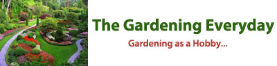 The Gardening Everyday