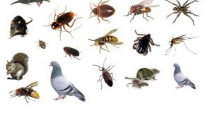 3 Common Pests You May Find in Your Home and What to Do About Them