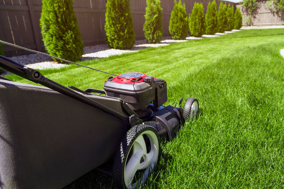 Basic Things To Consider For Proper Lawn Care - hopscotchnannyagency